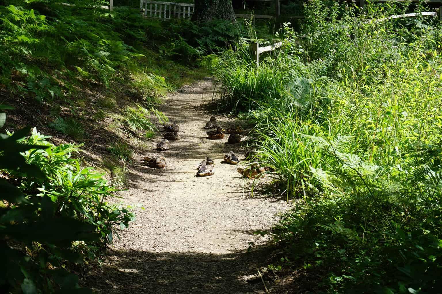 Days Out Wakehurst Botanical Gardens Sussex Scrapbook Blog